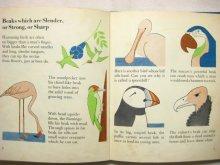 他の写真1: マリー・ノイラート「THE WONDER WORLD OF BIRDS」1953年
