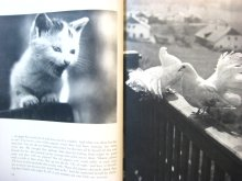 他の写真2: ヴァーツラフ・ジル「The Adventures of Susy the kitten」1963年