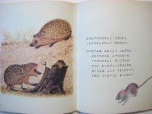 他の写真3: マルシャーク/レーベジェフ「ねずみのぼうや」1976年