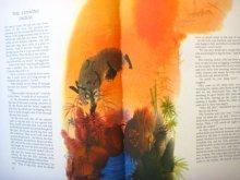 他の写真1: 【チェコの絵本】ミルコ・ハナーク「Animal Folk Tales」1971年