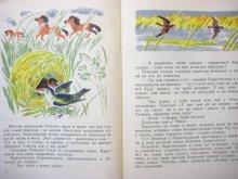 他の写真3: 【ロシアの絵本】ビアンキ/ニコラス・ティルサ「Лесные домишки」1969年