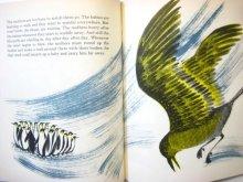 他の写真2: レナード・ワイスガード「Penguin's Way」1962年
