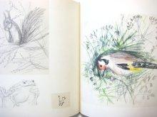 他の写真3: ハンス・フィッシャー「Skizzenbuch」1962年