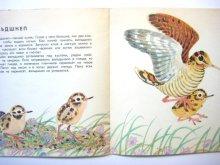 他の写真3: 【ロシアの絵本】ヴァレンチン・フェドートフ「Птицы наших лесов」1972年