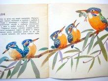 他の写真1: 【ロシアの絵本】ヴァレンチン・フェドートフ「Птицы наших лесов」1972年