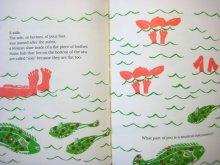 他の写真3: ジャネット・マキャフェリー「HOW SHIPS PLAY CARDS」1980年