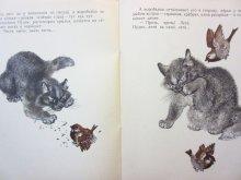 他の写真2: 【ロシアの絵本】ゴーリキー/エウゲーニー・チャルーシン「Воробьишко」1972年
