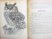 他の写真1: 【ロシアの絵本】エドゥアルド・シム/ニキータ・チャルーシン「Рассказы и сказки」1971年