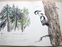 他の写真3: 【ロシアの絵本】絵:ラチョフ、チャルーシン等「絵本・ビアンキ動物記」1973年
