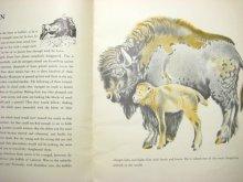 他の写真1: フェードル・ロジャンコフスキー「WILD ANIMALS AT HOME」1935年